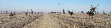 Travail sur jeune plantation en Indre